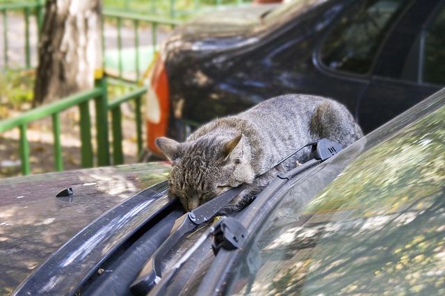 Będziesz spać jak ten kot. Wszędzie!