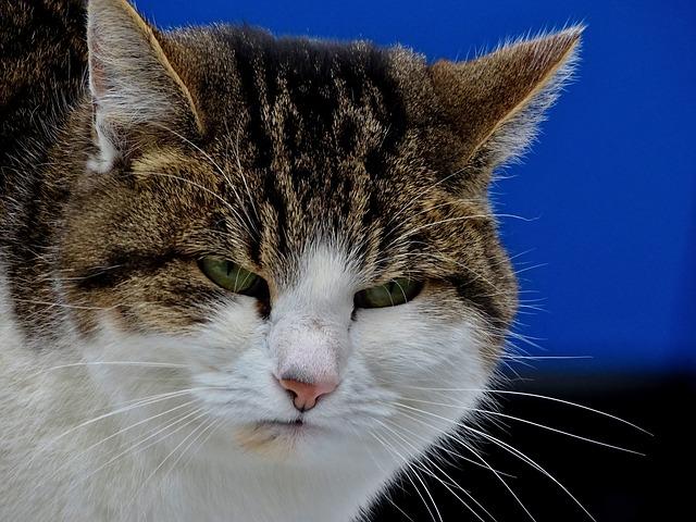 Wściekły kot oddaje moje uczucia